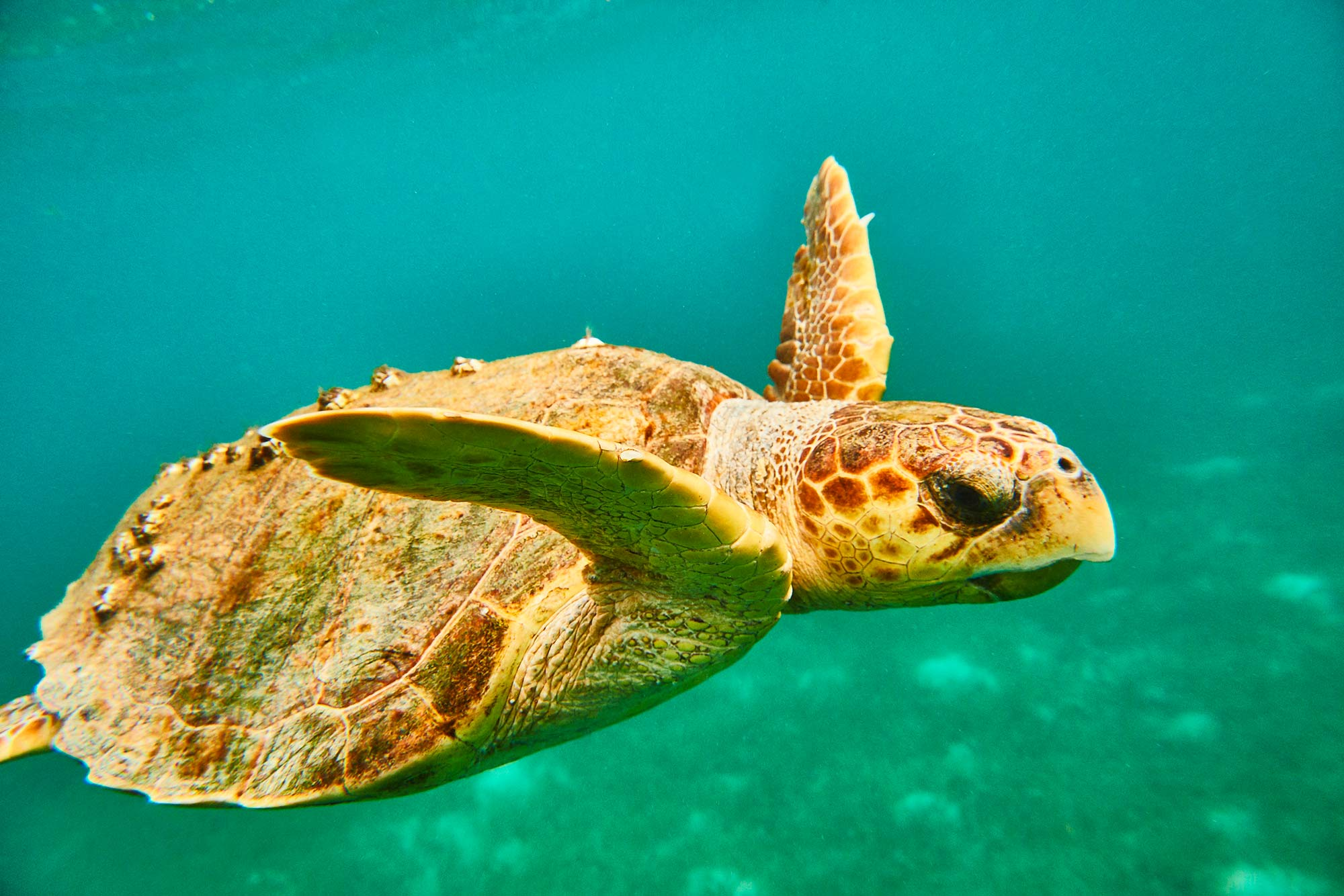BELIZE_Underwater-Tour_201